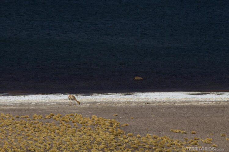 Contraste de cores e vida selvagem na Lagoa Miñiques