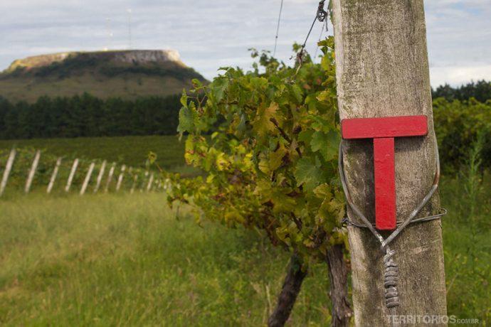 Visitando vinícolas da região Vinhos da Campanha em Santana do Livramento