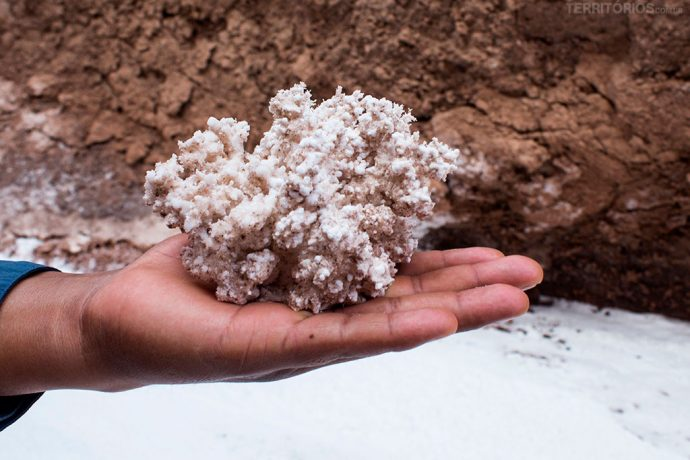 Coral de sal encontrado na trilha Quebrada de Kari