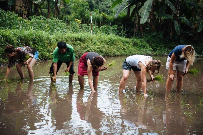 Plantando arroz do jeito antigo (foto Juan Jerez)
