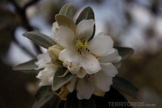Flor em Lavras Novas