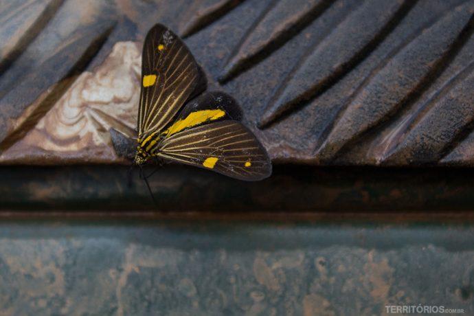 Fotos Estrada Real: borboleta