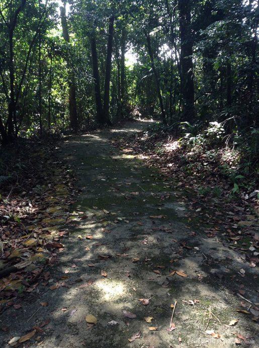 Forest Walk são trilhas no meio da floresta