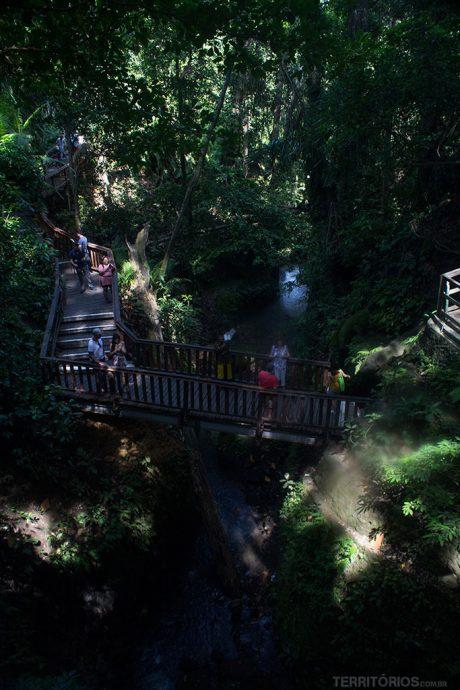 Passarelas por caminhos refrescantes na floresta