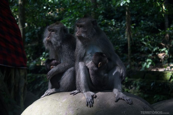 Família na Sagrada Floresta de Macacos de Ubud