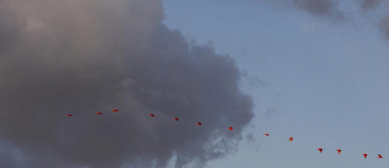 Céu com pássaros ilustra a galeria de fotos Jeri, Delta e Lençóis