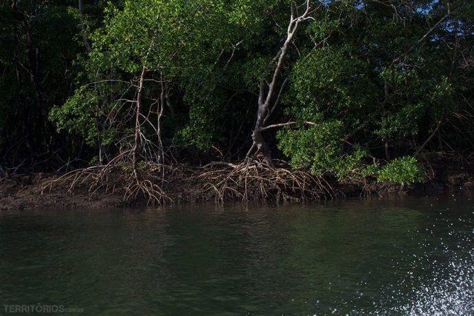 O mangue predomina em muitas ilhas