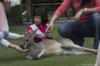 Crianças adoram a área dos cangurus