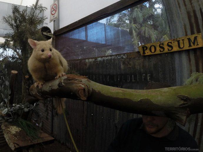 Possum no Farm Show