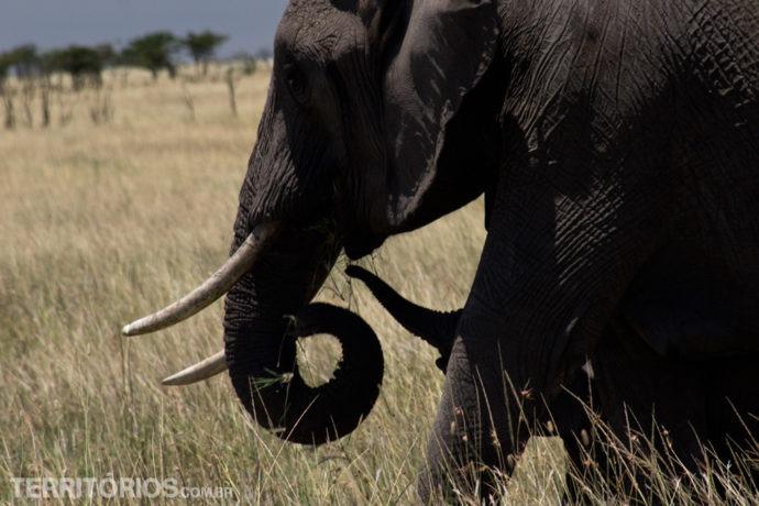 Babies africanos: elefante