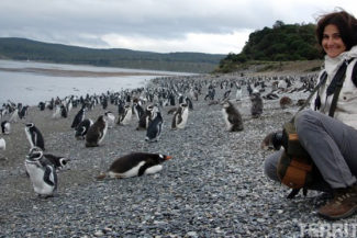 pinguins fofos