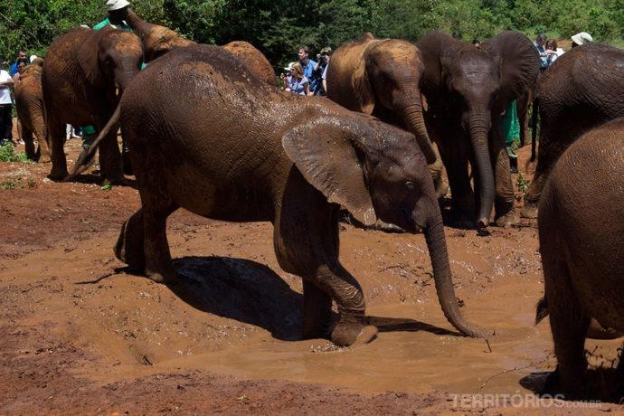 Hora de brincar na lama no orfanato de elefantes