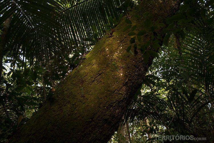 Região próxima a Autazes, Amazonas - Brasil