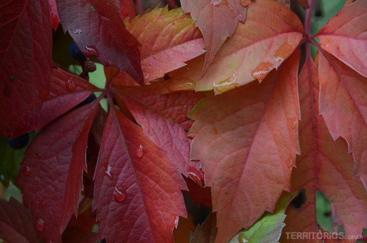 outono - itália