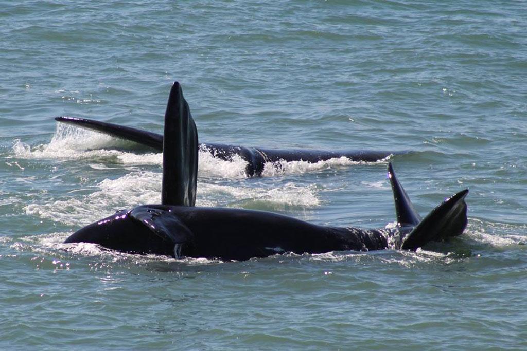 Rota da Baleia Franca: saiba onde ver baleias em Santa Catarina