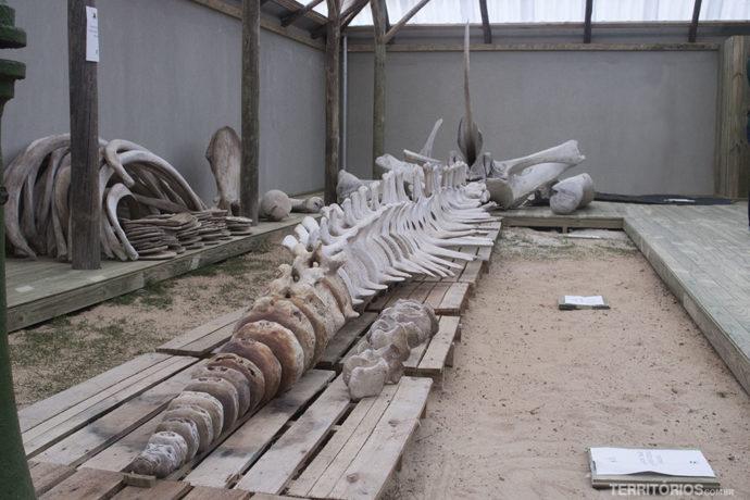 Ossos de baleia no Projeto Baleia Franca
