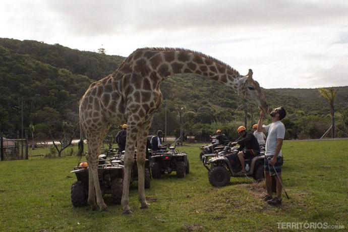 Girafa Abby interagindo com os visitantes