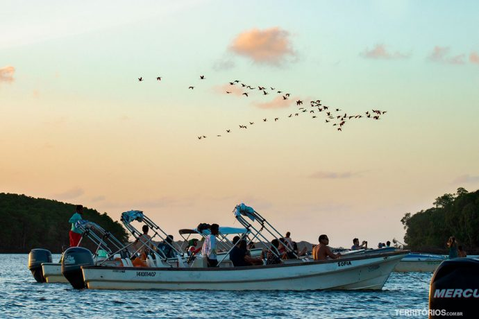 Barcos de turistas para ver a revoada dos guarás