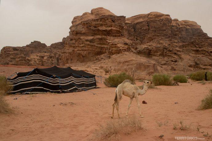 Acampamento beduíno selvagem