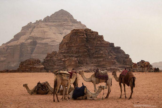 Camelos disponíveis para passeio em Wadi Rum