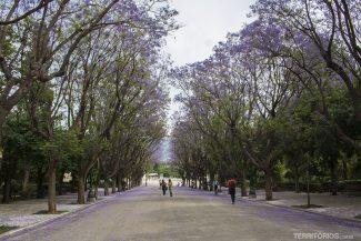 Primavera em Atenas