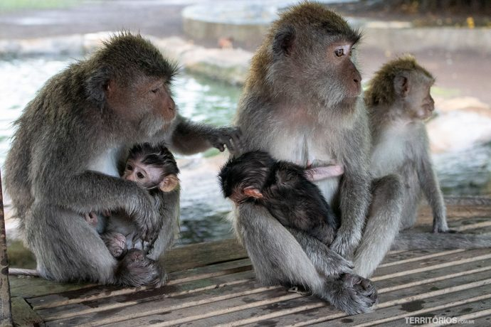 Sagrada Floresta de Macacos de Ubud