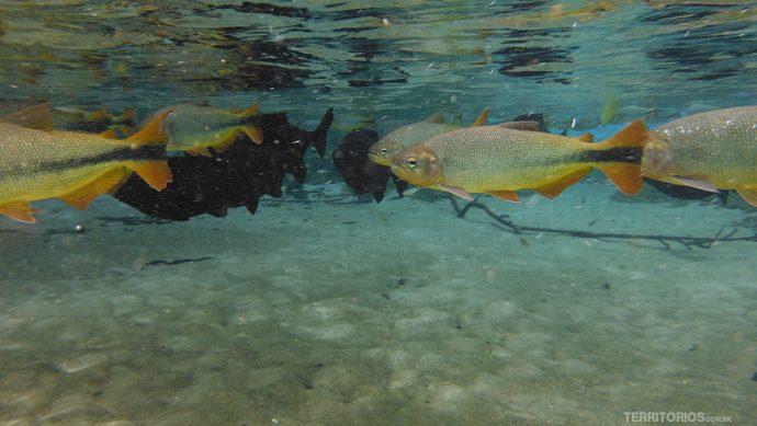 Experiência única com rios de água doce em Bonito