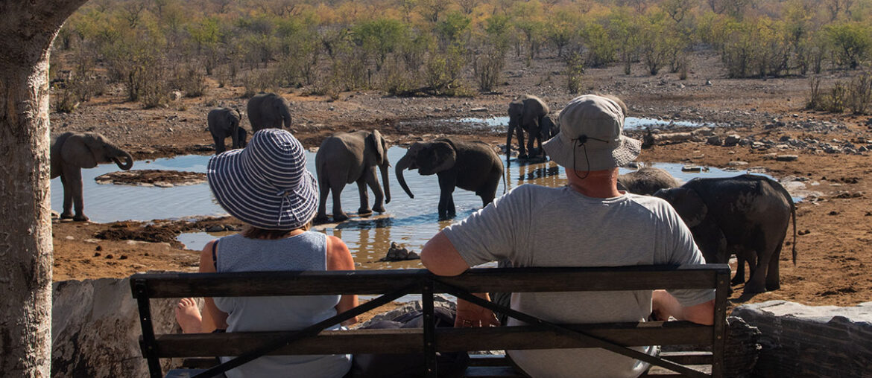 Casal observa elefantes no Parque Nacional Etosha