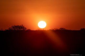 Pôr do sol na savana africana