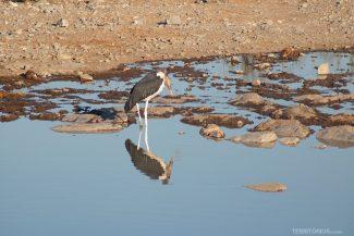 Pássaro grande no lago