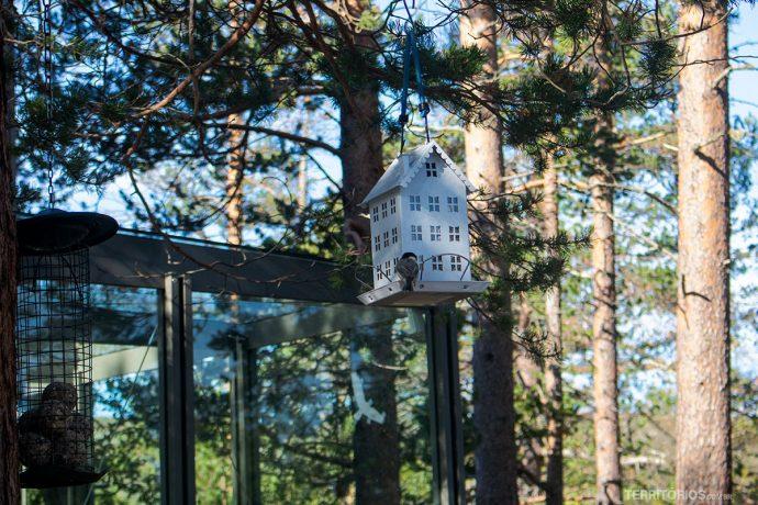 Casa de passarinhos na floresta ancestral