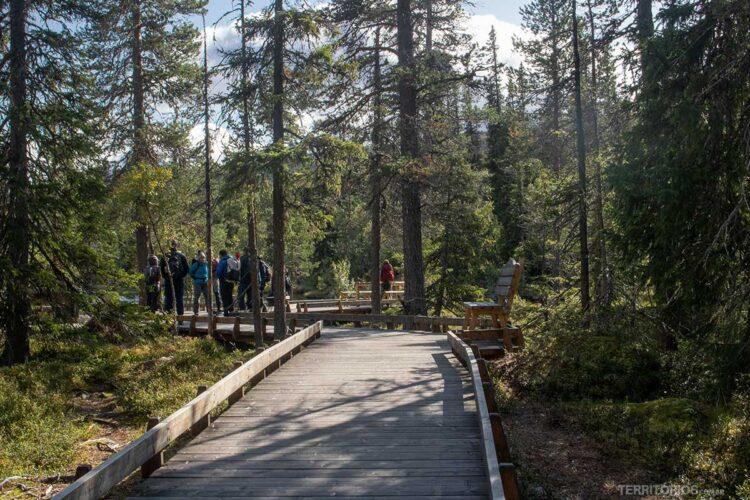 Floresta ancestral na Suécia