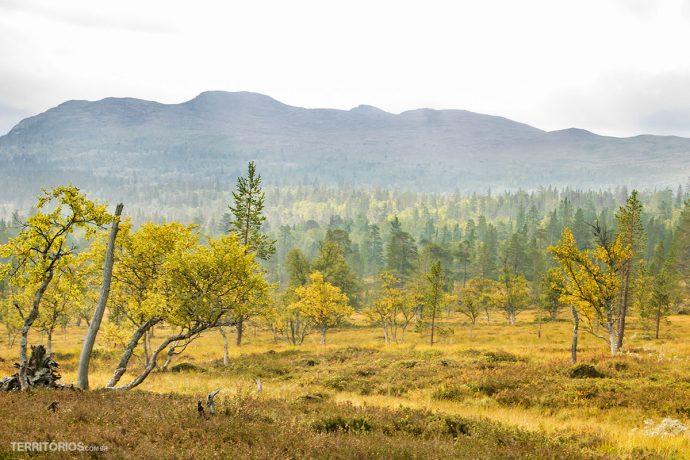 Cores de outono no início de setembro