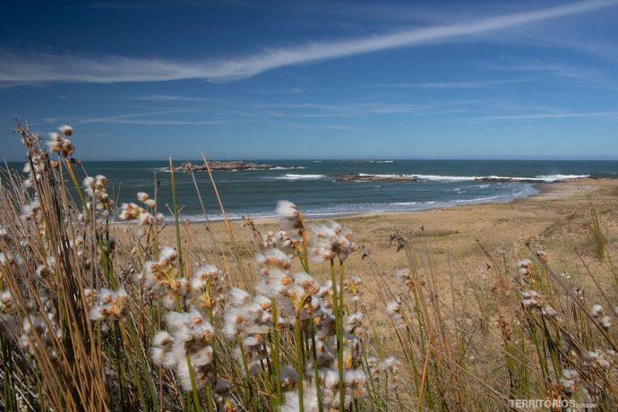 Vista para o mar e vegetação rasteira