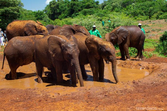 Elefantes na hora da mamadeira por live streaming
