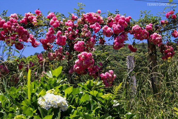Serra Gaúcha é um dos lugares legais para viajar na primavera